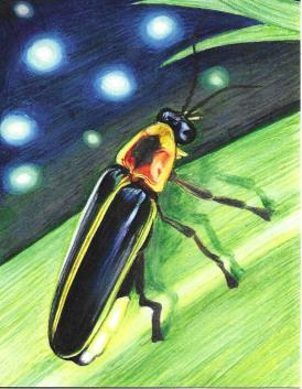 Firefly (NOTECARD 6-PACK)